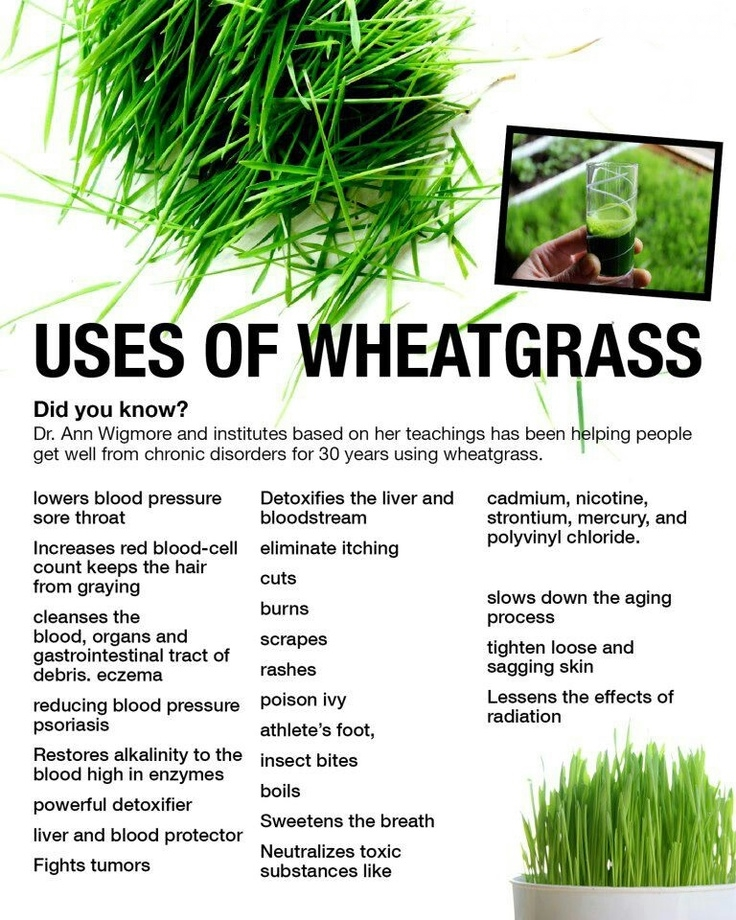 usses of Wheatgrass