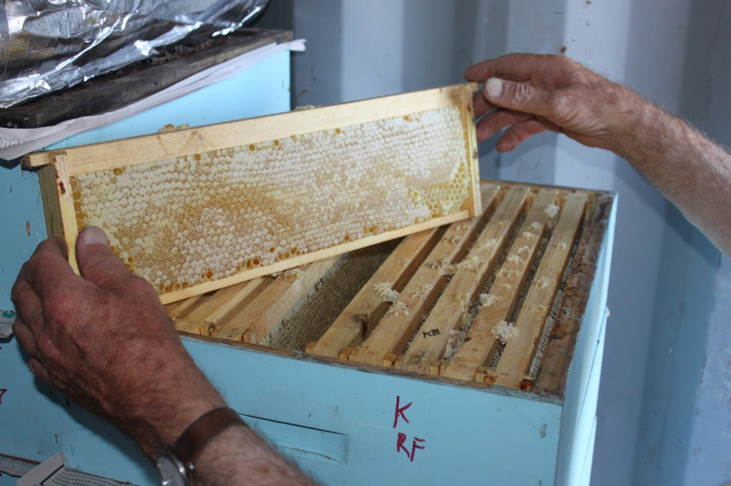 Hive_honeycomb_manuka_honey